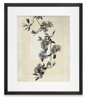 flower.s.19 by Thomas Ruff contemporary artwork