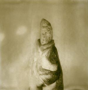 Silentium #12 by Euro Rotelli contemporary artwork