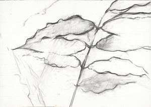 Leaves 181017 葉子181017 by Jeng Jundian contemporary artwork