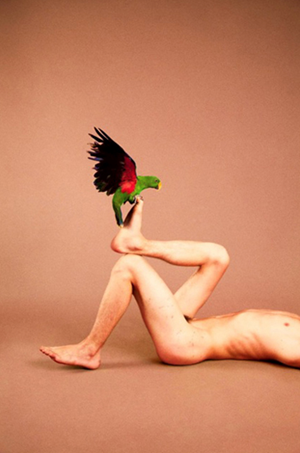 Male Grand Eclectus Parrot (Sandstone) by Ryan McGinley contemporary artwork