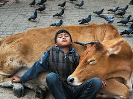 Steve McCurry's photos show the complex relationship between humans and animals