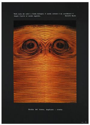 Eye of the tree trunk Eye of the double tree trunk = Owl Objet signifié by Mirella Bentivoglio contemporary artwork