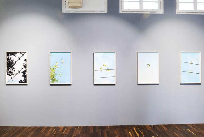 Exhibition view:Yoshinori Mizutani, Birds,Christophe Guye Galerie, Showroom (28 February–25 April 2020). CourtesyChristophe Guye Galerie.