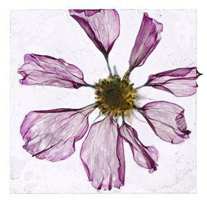 Flowers Unknown 10 by Brigitte Lustenberger contemporary artwork