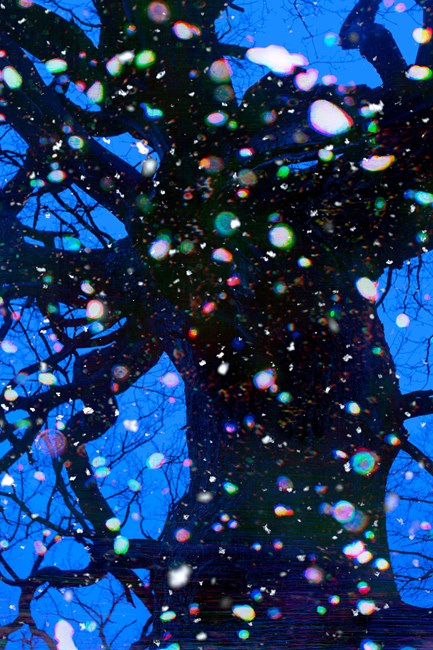 Trees and Snow I by Tim Maguire contemporary artwork