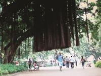A árvore que caminha by Marcos Chaves contemporary artwork moving image