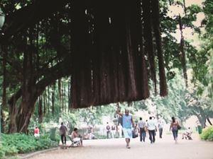 A árvore que caminha by Marcos Chaves contemporary artwork