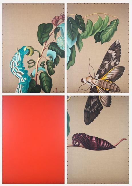 Phalaena by Gabriela Bettini contemporary artwork