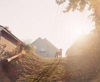 Dog on Hill (Sunrise), Omaha, NE by Gregory Halpern contemporary artwork photography