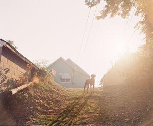 Dog on Hill (Sunrise), Omaha, NE by Gregory Halpern contemporary artwork
