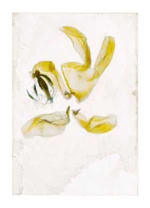 Flowers Unknown 16 by Brigitte Lustenberger contemporary artwork