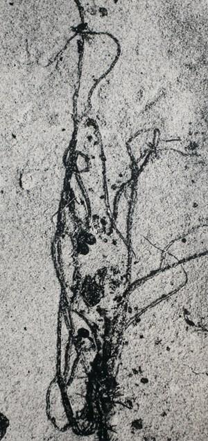 Seaweed #3, Martha's Vineyard by Aaron Siskind contemporary artwork