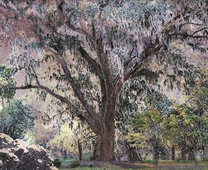 Scenapse 3 (Spanish Moss) by Aziz + Cucher contemporary artwork