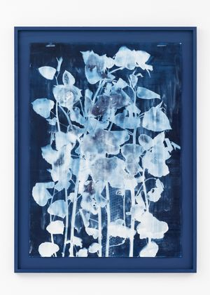Japanese Knotweed (Fallopia japonica) by Tue Greenfort contemporary artwork