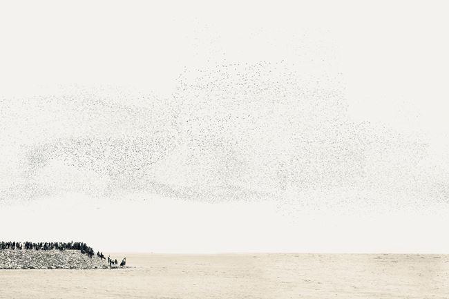 The Lines We Draw III (Towards Alaska) by Robert Zhao Renhui contemporary artwork