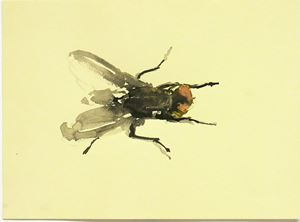 House Fly (From the series: Even A Fly Has A Soul) by Michelle Charles contemporary artwork