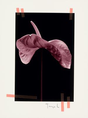 #79 by Tanja Lažetić contemporary artwork