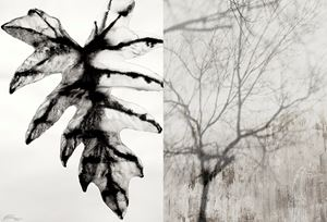 Reflections, Nature Series #6 & #11 by Barbara Edelstein contemporary artwork