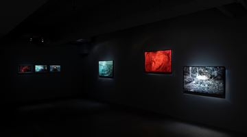 Contemporary art exhibition, Robert Zhao Renhui, New Forest at Mind Set Art Center, Taipei