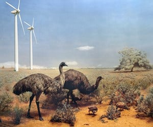 Emu, Riverina District of New South Wales by Anne Zahalka contemporary artwork