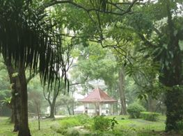 4K Walking in Thunderstorm LOUD Monsoon Rain ASMR Rainforest / Nostalgic Singapore Walk 209