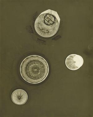 No title by Eva Hesse contemporary artwork