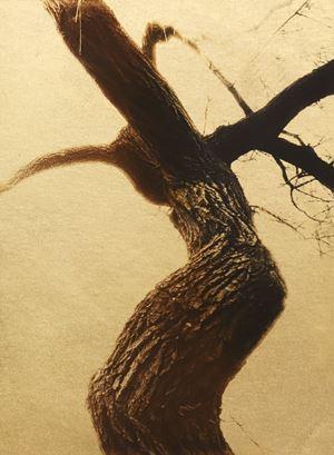 Glanage - 12 by Naohiro Ninomiya contemporary artwork photography