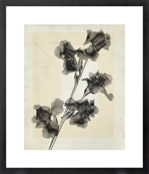 flower.s_13 by Thomas Ruff contemporary artwork
