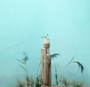Tern and blue background by Eric Pillot contemporary artwork
