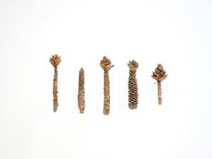 Las flours digl gôt - Sciurus by Mirko Baselgia contemporary artwork
