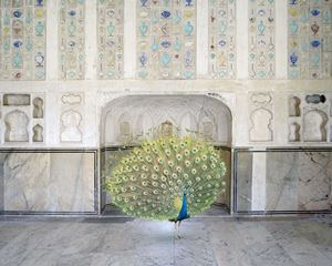 Master of Seduction, Amer Fort, Amer by Karen Knorr contemporary artwork photography