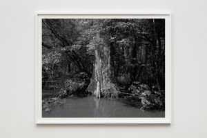 Swamp by Dawoud Bey contemporary artwork photography