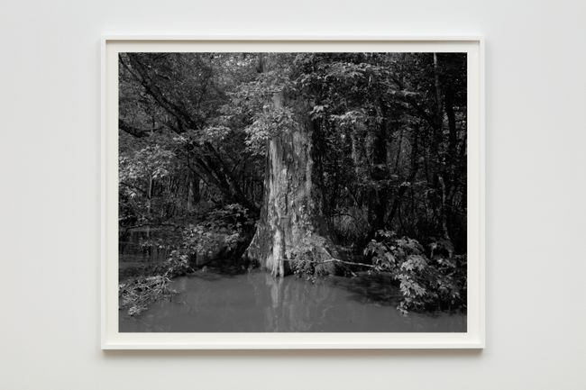 Swamp by Dawoud Bey contemporary artwork