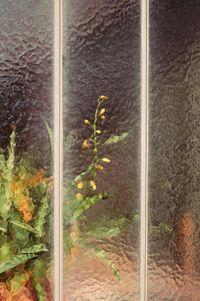 Bromeliaceae by Samuel Zeller contemporary artwork photography