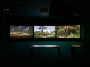 Four Nocturnes by John Akomfrah contemporary artwork
