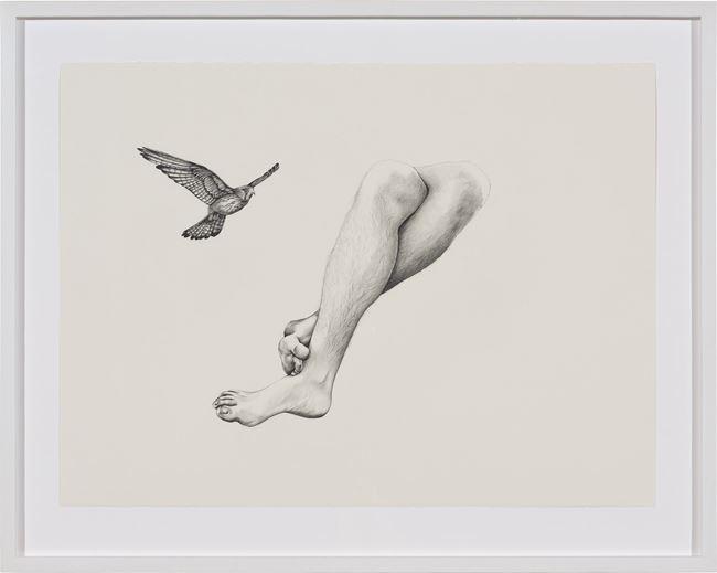 Inseparable (Nankeen Kestrel) by Patricia Piccinini contemporary artwork