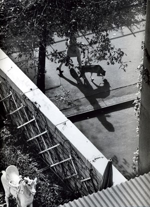 New York (Woman Walking Dog) by André Kertész contemporary artwork