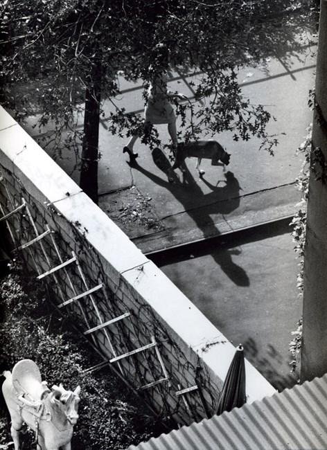 New York (Woman Walking Dog) by André Kertész contemporary artwork
