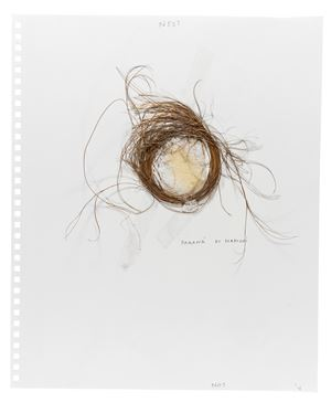 Nest by Not Vital contemporary artwork