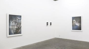 Contemporary art exhibition, Anne Noble, Eidolon at Jonathan Smart Gallery, Christchurch