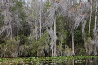 Untitled #3 (Swamps) by Catherine Opie contemporary artwork photography, print