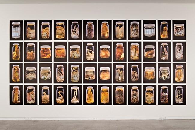 Anthropoda by Neil Pardington contemporary artwork