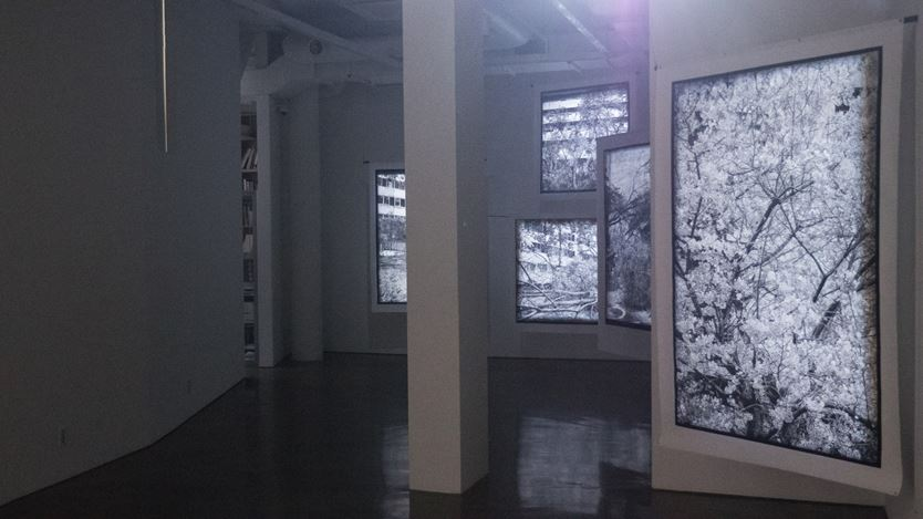 Exhibitioin view: Kim Donki, Trees_seoul, Gallery Chosun, Seoul (3 December–16 December 2020). Courtesy Gallery Chosun.