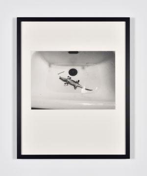 Caiman by Lothar Baumgarten contemporary artwork