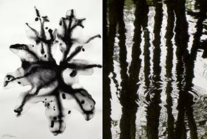 Nature Series #1 & #14 by Barbara Edelstein contemporary artwork