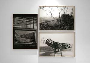 Lighting/The Hawaii Diorama/Bald Eagle by Gabriela Bettini contemporary artwork