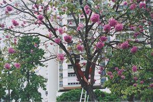 Em uma árvore em uma tarde by Brígida Baltar contemporary artwork