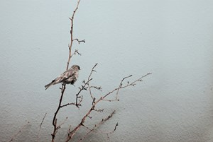 Recent Species of The New World -- Varient#12 by Robert Zhao Renhui contemporary artwork