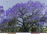 D.116 Purple Reign by Gary Carsley contemporary artwork 2