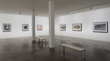 Contemporary art exhibition, Boyd Webb, From the Cusp at Two Rooms, Auckland